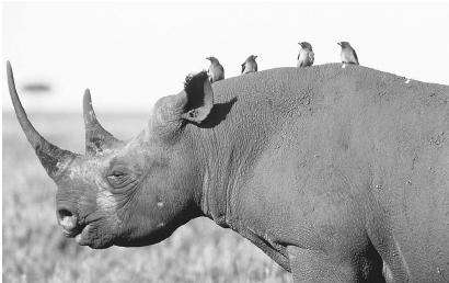 tick bird and rhinoceros relationship marketing