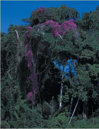The Amazonian rain forest is rich in plant and animal life. (Reproduced by permission of Photo Researchers, Inc.)