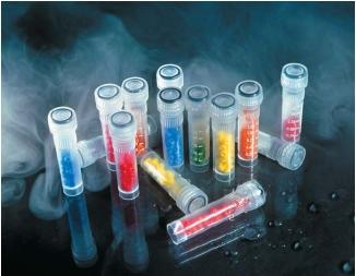 Cryotubes used to store strains of bacteria at low temperature. Bacteria are placed in little holes in the beads inside the tubes and then stored in liquid nitrogen. (Reproduced by permission of Photo Researchers, Inc.)