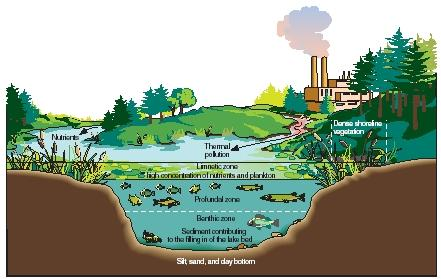 An eutrophic lake. (Reproduced by permission of The Gale Group.)