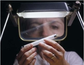 A woman examining a small mercury fluorescent lightbulb. (Reproduced by permission of Field Mark Publications.)