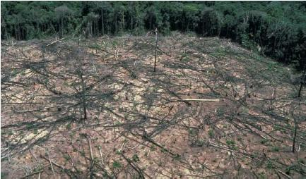 Deforestation in the jungle in Brazil. (Reproduced by permission of Photo Researchers, Inc.)
