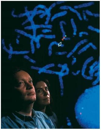 Researchers Dr. Nigel Carter and Sheila Clegg studying a FISH micrograph of chromosomes marked to reveal the presence of genes for the Human Genome Project. (Reproduced by permission of Photo Researchers, Inc.)