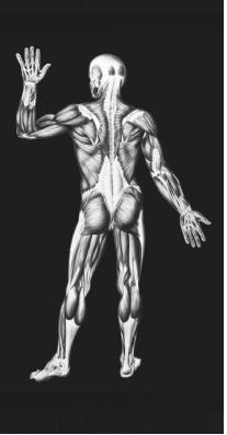 muscular system - body, used, life, type, chemical, form, energy, Muscles