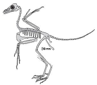 Paelontolgists use the bones they find to figure out the complete structure of different extinct animals. (Reproduced by permission of The Gale Group.)