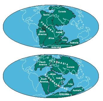 The Pangaea supercontinent (top) and after it is broken up into Laurasia and Gondwanaland (bottom). Contemporary continental outlines are shown in gray. (Reproduced by permission of The Gale Group.)