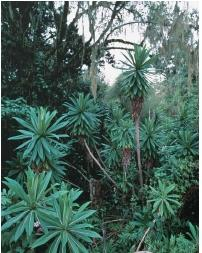A Kenyan rain forest. (Reproduced by permission of The Stock Market.)