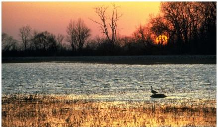 Sunset on a wetland near Lake Erie in Crane Creek State Park. During low water periods, mud flats are exposed, providing nesting platforms for waterfowl like this Canadian goose. (Reproduced by permission of Field Mark Publications.)
