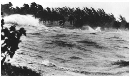 Winds from a 1945 hurricane in Florida. (Reproduced courtesy of the Library of Congress.)