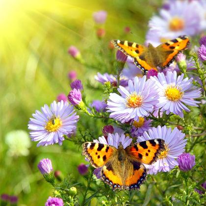 Butterflies - body, process, Earth, life, plants, type, form