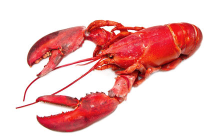 Crustaceans - body, used, water, process, life, plants, type, chemical