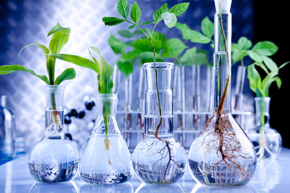 Genetic engineering concept how it works real life for Pollution fighting plants