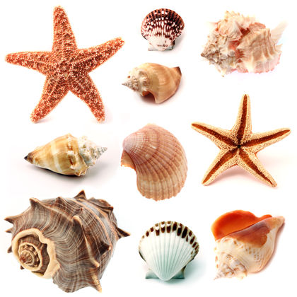 Mollusks Body Used Water Process Life Animals Oxygen Air