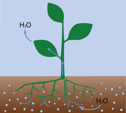 Flushing: The Myth that won't Die | Page 3 | The ... |Osmosis In Plant Roots